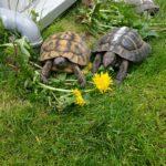 Aus Altersgründen beende ich mein Hobby Schildkröten zu halten