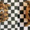Griechische Landschildkröte Dalmatinische Hercegovinensis NZ 2019