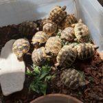 Landschildkröten NZ 2020