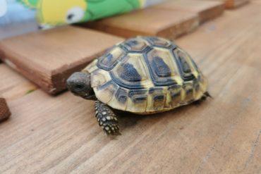 Kleine Schildkröte zugelaufen